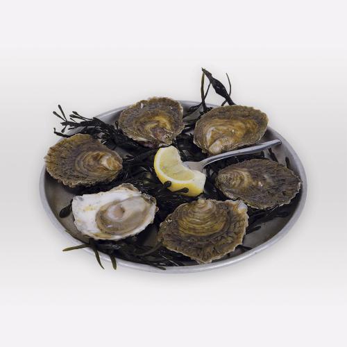Huîtres plates de Bélon - Les Viviers du Bélon
